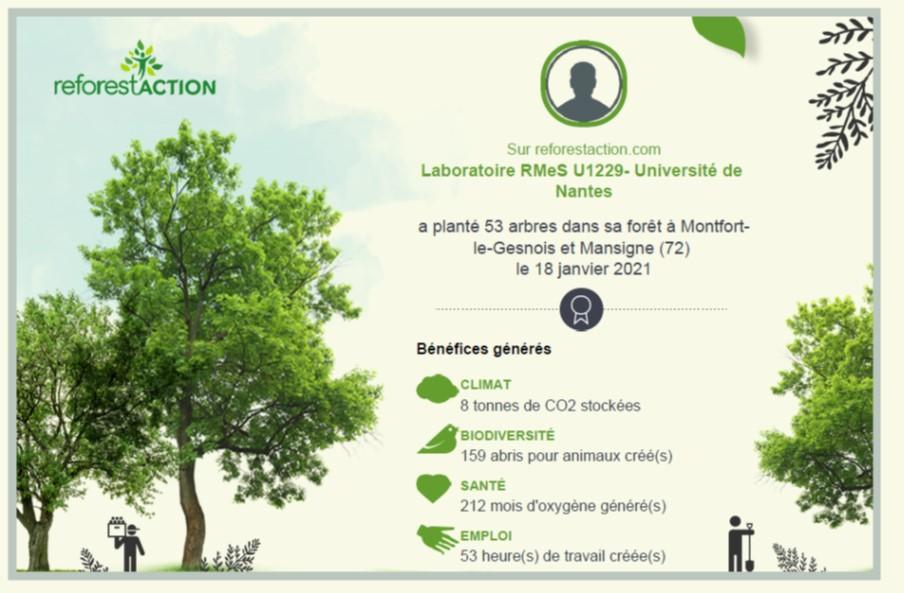 arbres 2021